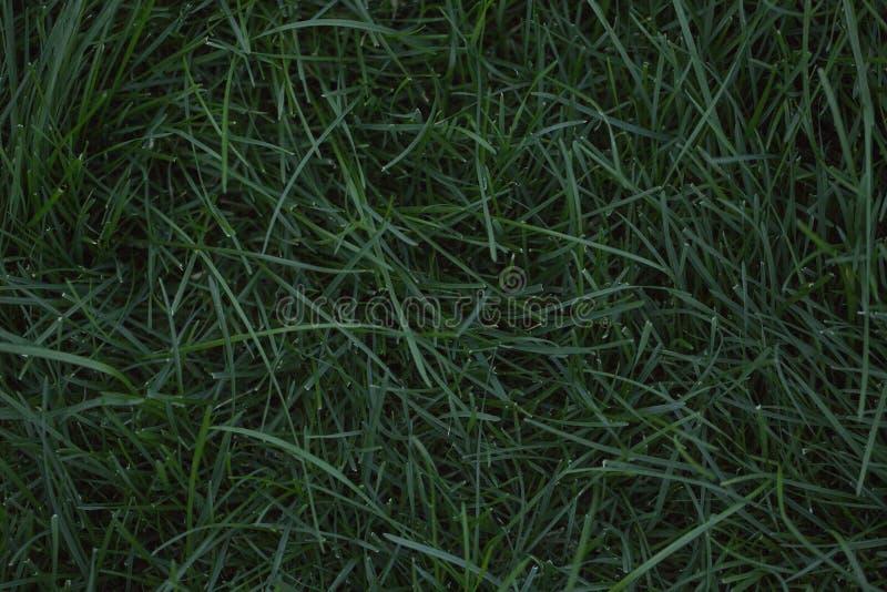 Σμαραγδένιος πράσινος χορτοτάπητας στοκ εικόνες με δικαίωμα ελεύθερης χρήσης