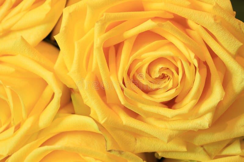 Σοβαρή ανθοδέσμη των λουλουδιών για τις όμορφες κυρίες, δέσμη των τριαντάφυλλων στοκ εικόνες