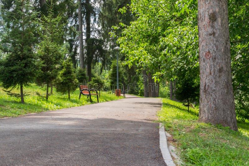 Σοκάκι με παγκάκια σε πράσινο πάρκο κατά τη θερινή ώρα στοκ φωτογραφία