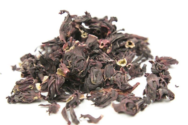 Σουδανέζικα αυξήθηκε, karkade, hibiscus στοκ φωτογραφία με δικαίωμα ελεύθερης χρήσης