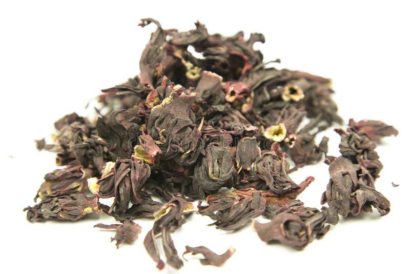 Σουδανέζικα αυξήθηκε, karkade, hibiscus στοκ εικόνα με δικαίωμα ελεύθερης χρήσης