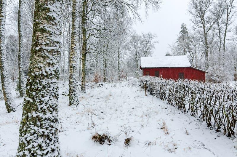 Σουηδικά χειμερινά χρώματα στοκ εικόνα
