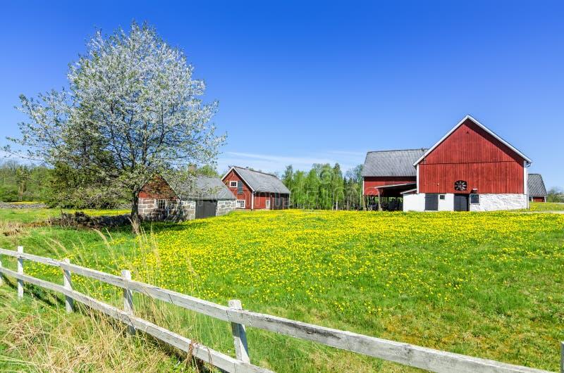 Σουηδικό αγρόκτημα άνοιξη με τον παραδοσιακό φράκτη στοκ εικόνες με δικαίωμα ελεύθερης χρήσης