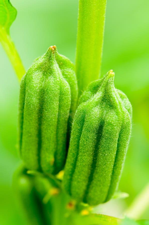 σουσάμι σπόρων στοκ εικόνες με δικαίωμα ελεύθερης χρήσης