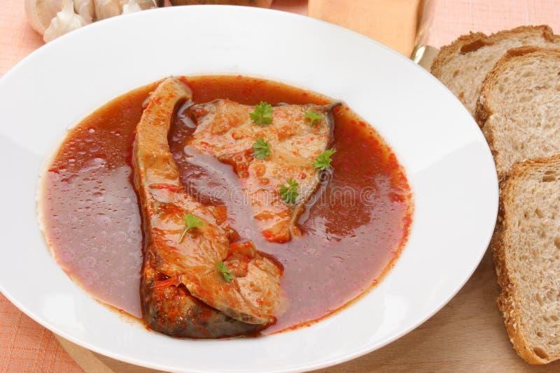 σούπα ψαριών κυπρίνων νόστιμ&et στοκ φωτογραφία