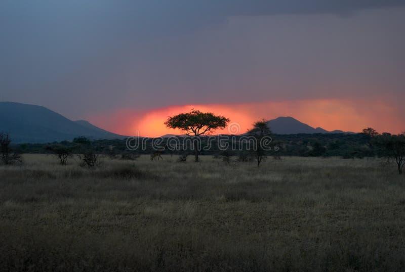 Σούρουπο στο Serengeti - ήλιος που θέτει πίσω από ένα δέντρο στοκ εικόνες με δικαίωμα ελεύθερης χρήσης