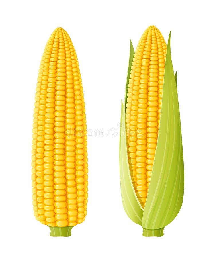 Σπάδικας καλαμποκιού Οργανική τροφή διανυσματική απεικόνιση