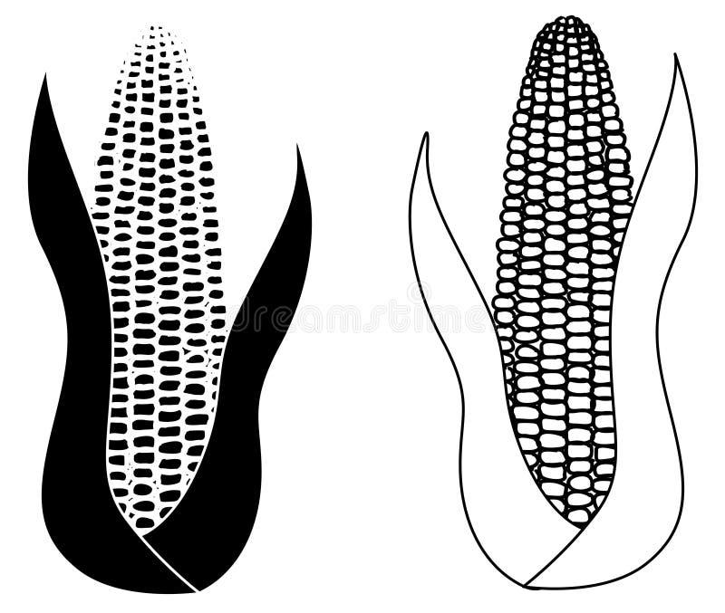 Σπάδικας καλαμποκιού που απομονώνεται στο άσπρο υπόβαθρο ελεύθερη απεικόνιση δικαιώματος