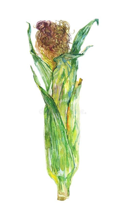 Σπάδικας Watercolor του καλαμποκιού απεικόνιση αποθεμάτων