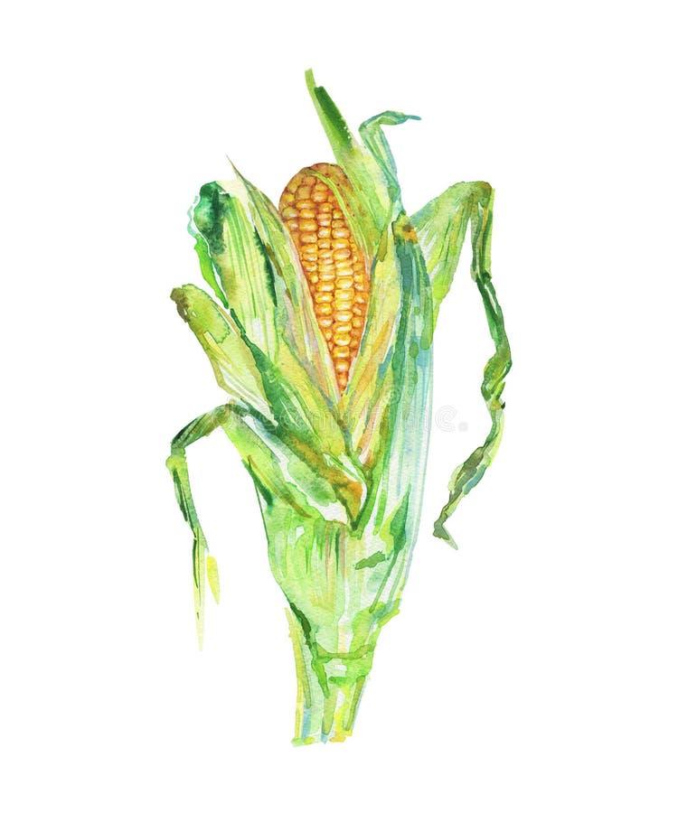 Σπάδικας Watercolor του καλαμποκιού διανυσματική απεικόνιση