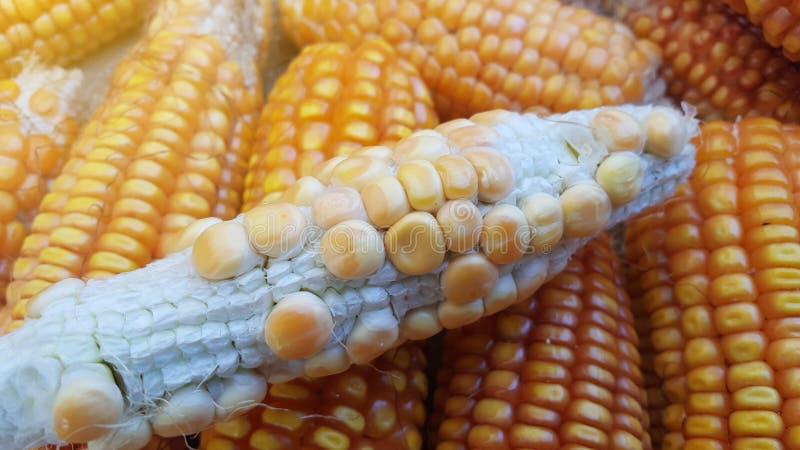 Σπάδικες καλαμποκιού, ένα από τα εναλλακτικά συστατικά τροφίμων στοκ φωτογραφία