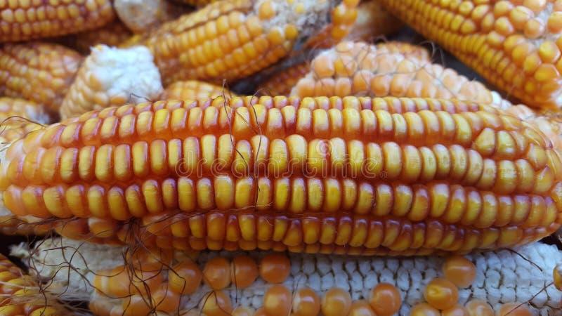 Σπάδικες καλαμποκιού, ένα από τα εναλλακτικά συστατικά τροφίμων στοκ φωτογραφίες με δικαίωμα ελεύθερης χρήσης