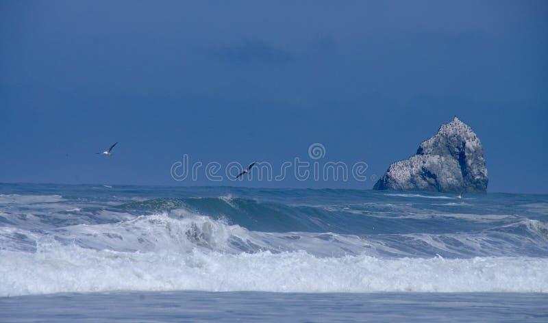 Σπάζοντας κύματα, μεγάλος βράχος, seagulls στην ακτή του Όρεγκον στοκ εικόνες με δικαίωμα ελεύθερης χρήσης