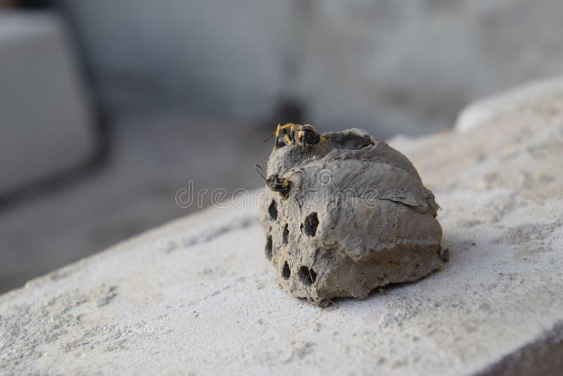 Σπάστε μια φωλιά των hornet του αργίλου στοκ εικόνες