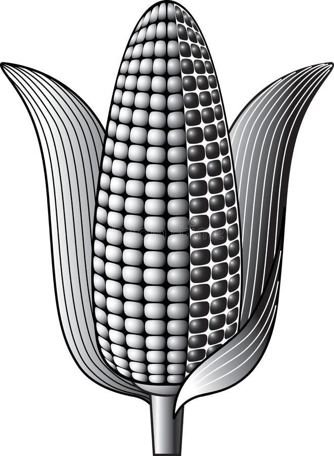 Σπάδικας του ώριμου καλαμποκιού απεικόνιση αποθεμάτων
