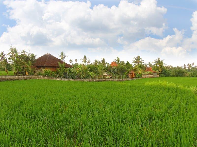 Σπίτια και τομείς ρυζιού σε Ubud, Μπαλί στοκ εικόνες με δικαίωμα ελεύθερης χρήσης