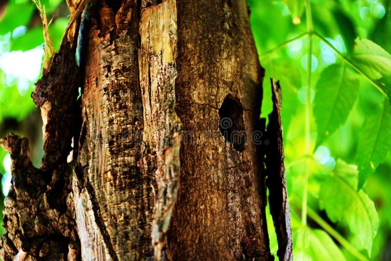 Σπίτι δέντρων στοκ εικόνα