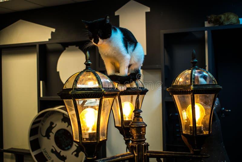 Σπίτι αγάπης γατών στοκ φωτογραφία