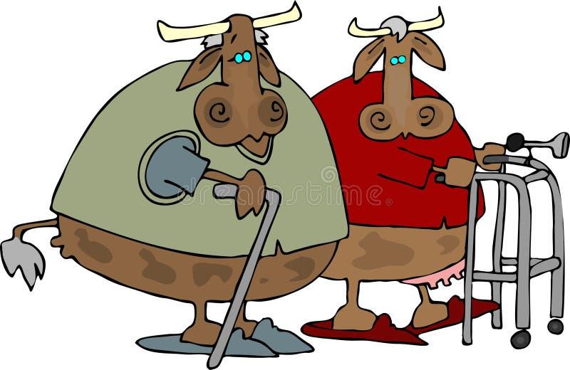 σπίτι αγελάδων παλαιό απεικόνιση αποθεμάτων