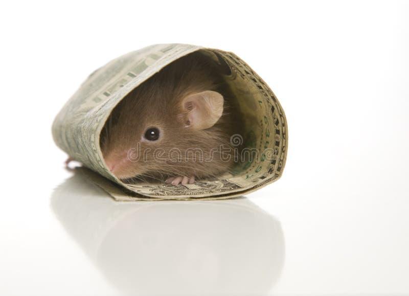 Σπίτι ασφάλειας δολαρίων για το ποντίκι στοκ φωτογραφίες