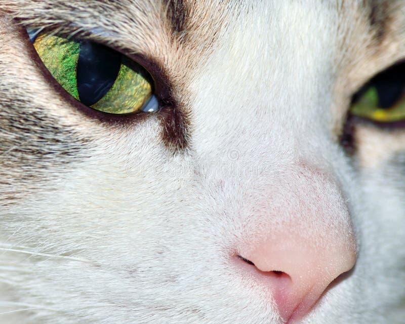 Download σπίτι γατών στοκ εικόνα. εικόνα από θηλαστικό, closeup - 22777803