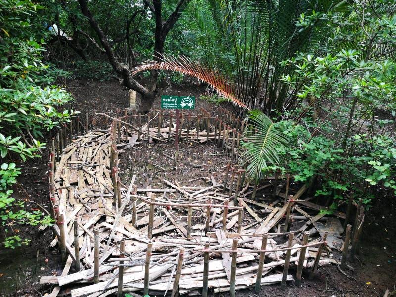 Σπίτι καβουριών στο δάσος μαγγροβίων σε Rayong, Ταϊλάνδη στοκ εικόνες