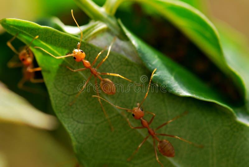 σπίτι μυρμηγκιών στοκ εικόνες με δικαίωμα ελεύθερης χρήσης