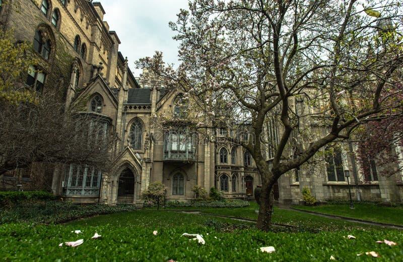 σπίτι Νέα Υόρκη Δέντρο Magnolia στοκ φωτογραφία