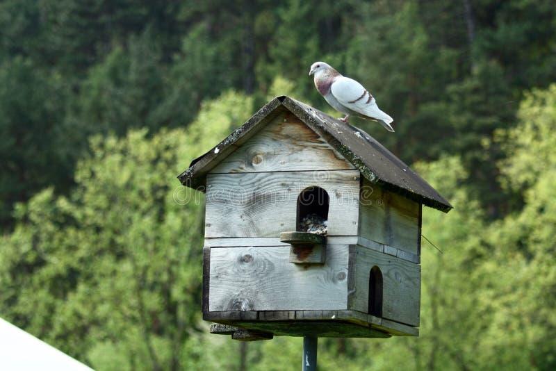 Σπίτι περιστεριών στοκ εικόνα με δικαίωμα ελεύθερης χρήσης