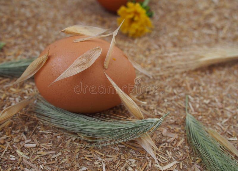 Σπίτι που μαγειρεύει «ακατέργαστα αυγά κοτόπουλου †στοκ εικόνα