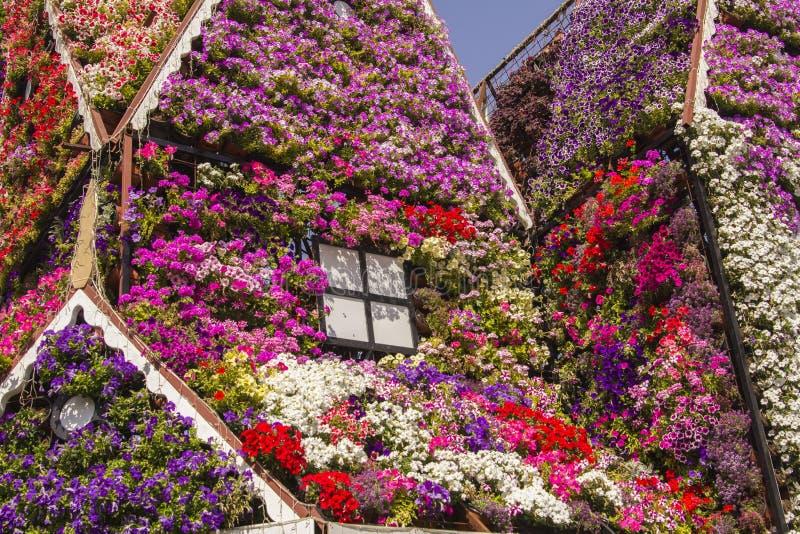 Σπίτι της ζωηρόχρωμης πετούνιας λουλουδιών στον κήπο θαύματος στοκ φωτογραφία με δικαίωμα ελεύθερης χρήσης