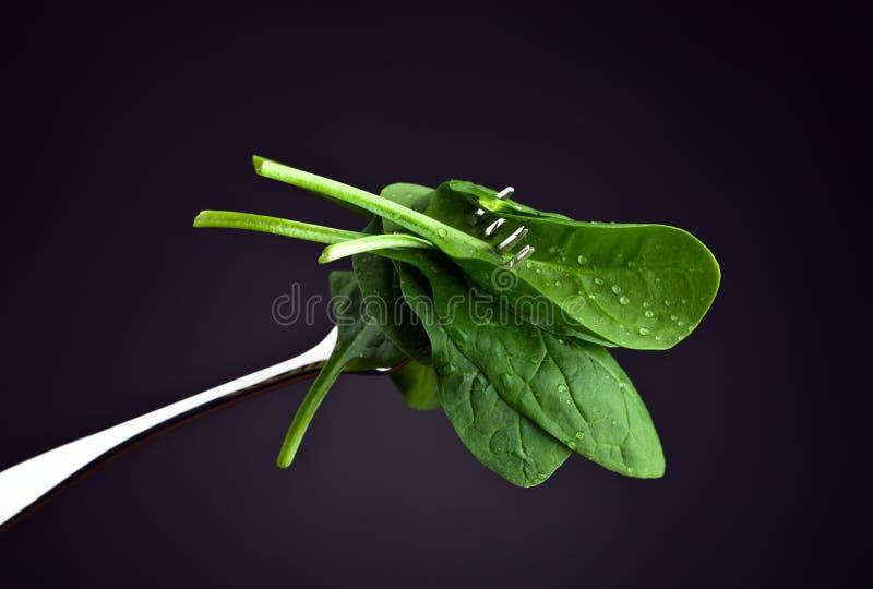 Σπανάκι στο σκοτεινό υπόβαθρο στοκ φωτογραφία