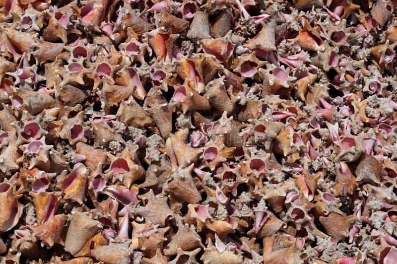 Σπασμένα κοχύλια θάλασσας σε μια παραλία στοκ εικόνες με δικαίωμα ελεύθερης χρήσης