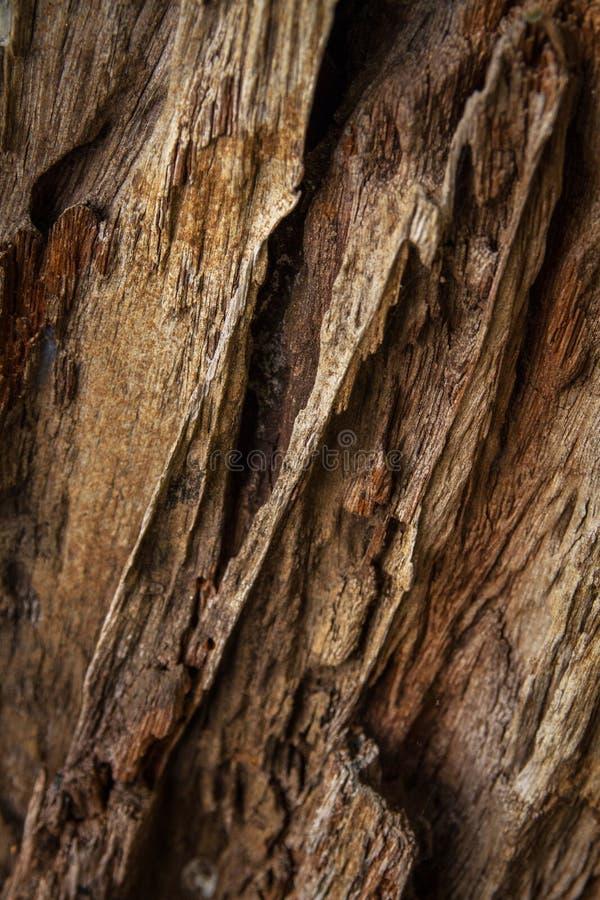Σπασμένη ζημία τερμιτών ξυλείας στοκ φωτογραφία