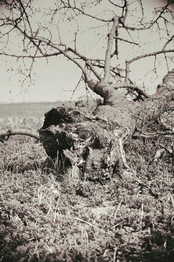σπασμένος κορμός δέντρων στοκ εικόνα με δικαίωμα ελεύθερης χρήσης