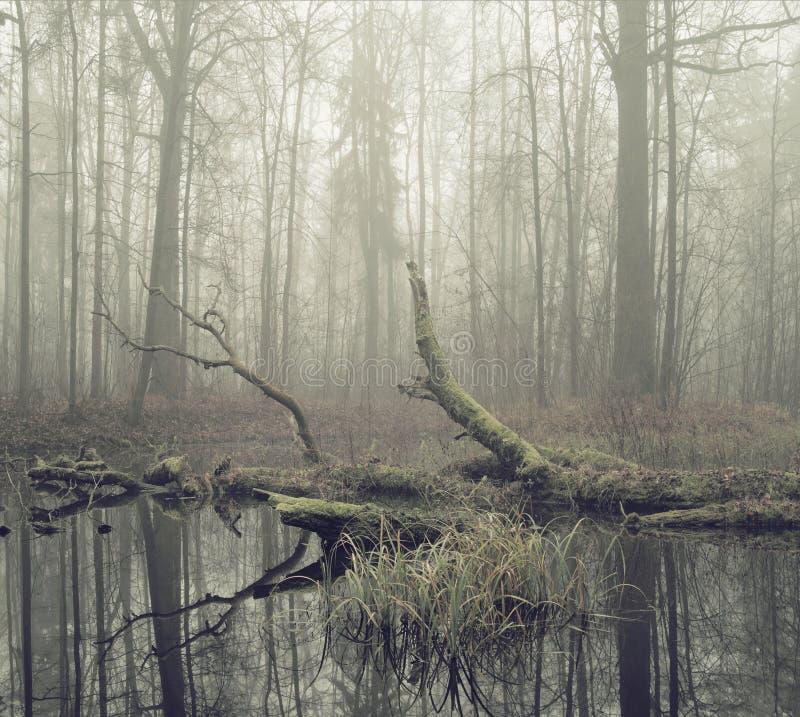 Σπασμένο δέντρο που βυθίζεται στο νερό στοκ εικόνα με δικαίωμα ελεύθερης χρήσης