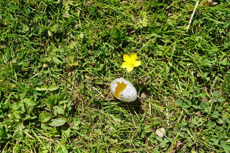 Σπασμένο αυγό πουλιών στοκ φωτογραφίες με δικαίωμα ελεύθερης χρήσης