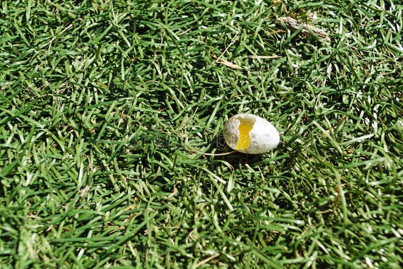 Σπασμένο αυγό πουλιών στοκ φωτογραφία με δικαίωμα ελεύθερης χρήσης