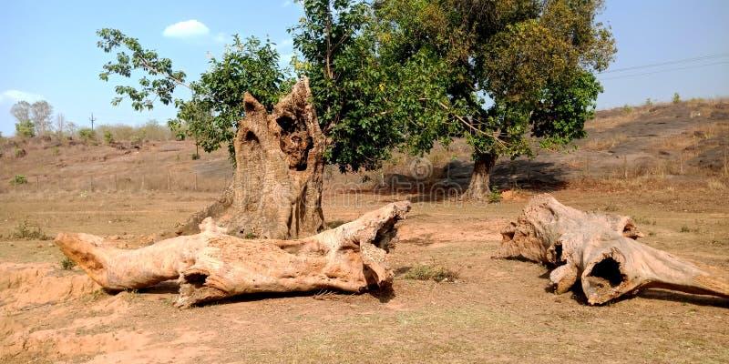 Σπασμένο δέντρο στο δάσος στοκ φωτογραφίες με δικαίωμα ελεύθερης χρήσης