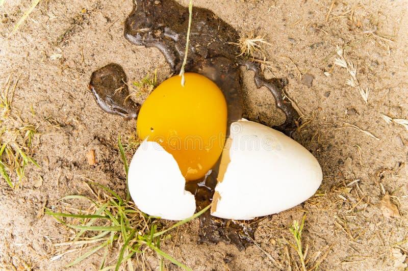 Σπασμένο πεσμένο αυγό στο έδαφος στοκ εικόνα