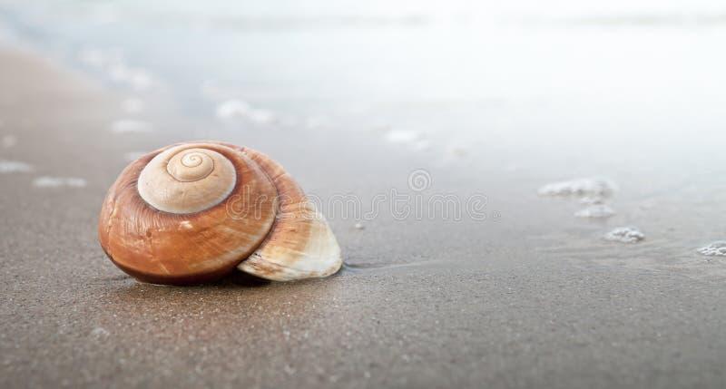 σπείρα θαλασσινών κοχυλιών στοκ φωτογραφία με δικαίωμα ελεύθερης χρήσης