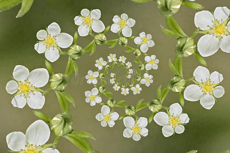 Σπειροειδείς φράουλες λουλουδιών στοκ εικόνες