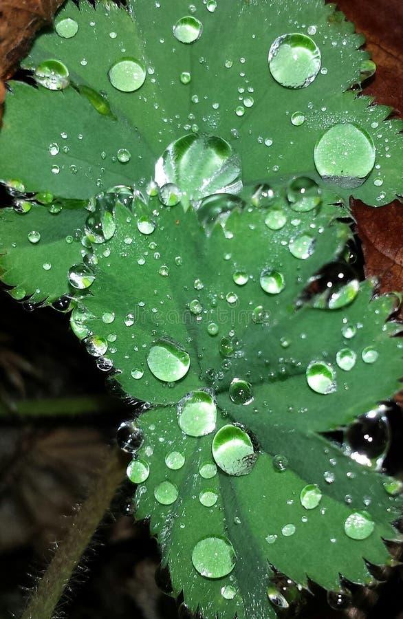 Σπινθήρισμα waterdrops στοκ φωτογραφίες