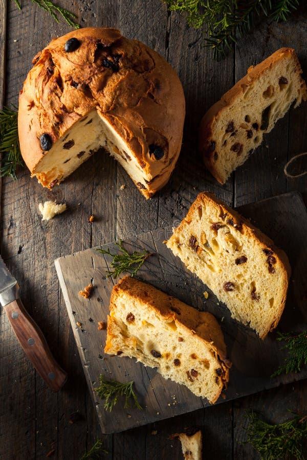 Σπιτικό ψωμί Panettone Χριστουγέννων ακόμη και στοκ εικόνες