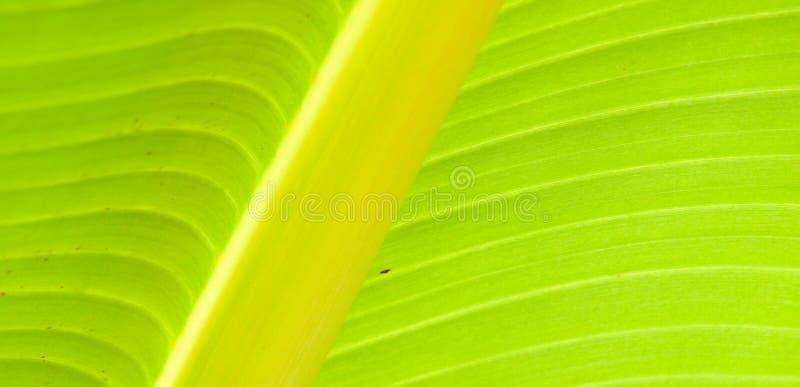 σπονδυλική στήλη φύλλων στοκ εικόνες με δικαίωμα ελεύθερης χρήσης