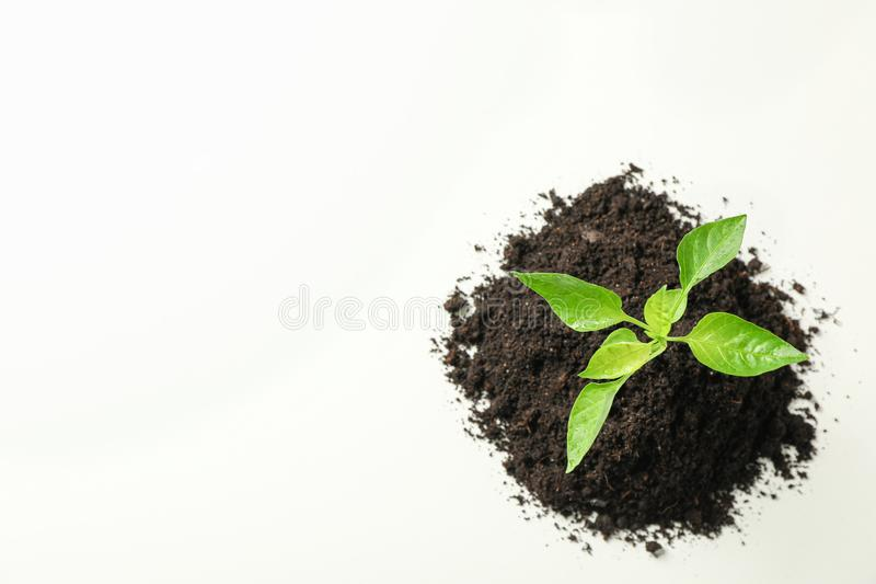 Σπορόφυτα δενδρυλλίων στο μαύρο χώμα στο άσπρο υπόβαθρο, τη τοπ άποψη και το διάστημα για το κείμενο Προστασία του περιβάλλοντος στοκ φωτογραφία με δικαίωμα ελεύθερης χρήσης