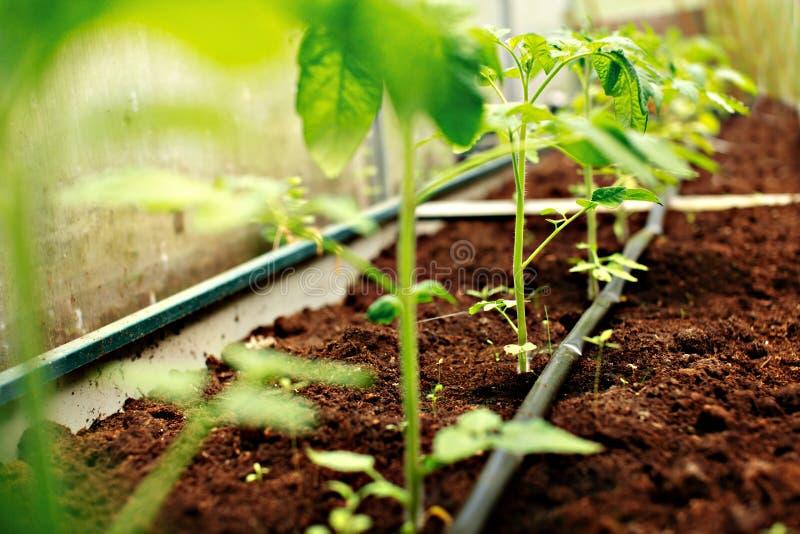 Σπορόφυτα στον κήπο στοκ εικόνα με δικαίωμα ελεύθερης χρήσης