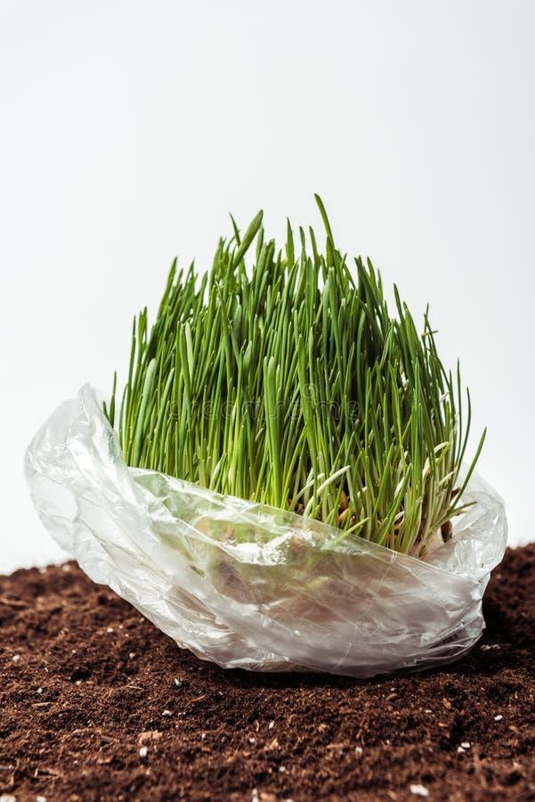 σπορόφυτο στη πλαστική τσάντα στο χώμα διανυσματική απεικόνιση