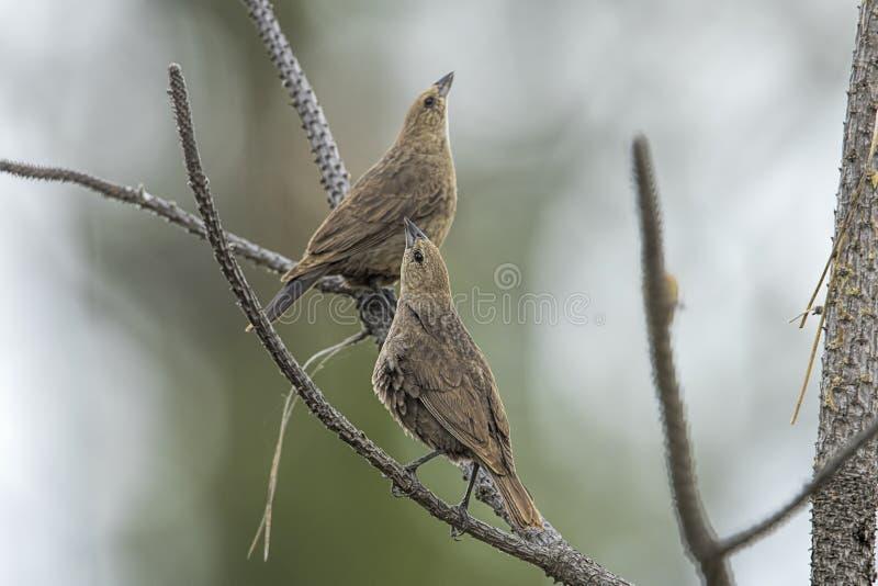 Σπουργίτια που τερετίζουν σε ένα δέντρο στοκ φωτογραφίες με δικαίωμα ελεύθερης χρήσης