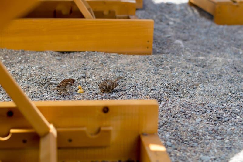 Σπουργίτι στην παραλία στοκ φωτογραφία με δικαίωμα ελεύθερης χρήσης